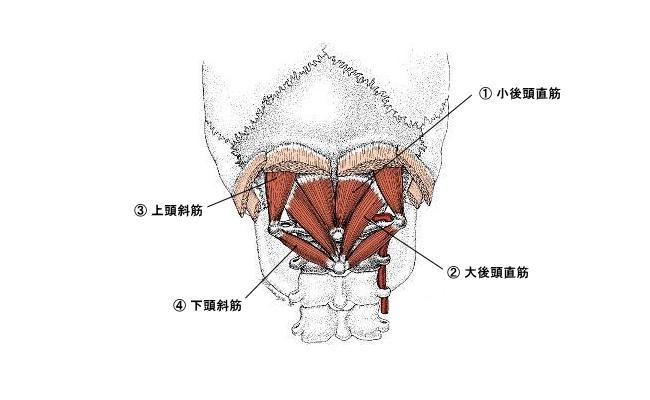 後頭部の筋肉