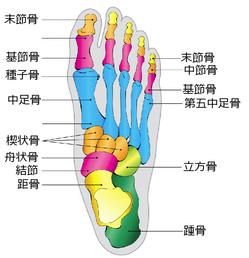 足の違和感・痛みのことなら京都市西京区の整体院【京都中丸整体カイロプラクティックへ】