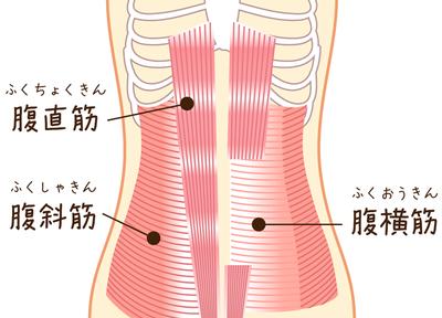 腹筋のイラスト